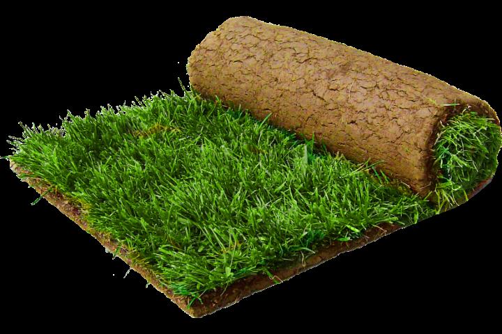 Рулонный газон и озеленение